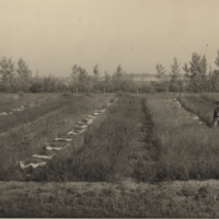 [Man in field at Melfort Research Farm]