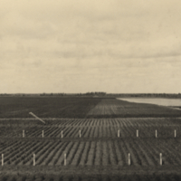 [Field with markers at Melfort Research Farm]