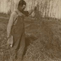 [Man holding plant material on Melfort Research Farm]