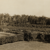 [Shrubs and trees on the Scott Research Farm]