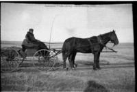 Horse-drawn wagon and driver on prairie