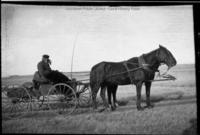 Horse-drawn wagon and driver