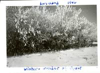 Luseland 1946 Winter-wonder of frost