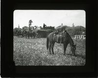 Steam thresher at work in a rice field, Texas