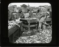 Cleaning codfish, Gloucester, Mass.