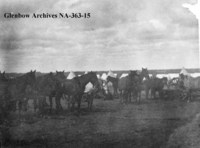 Horses, transport teams in camp.