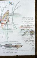 Biology Drawing
