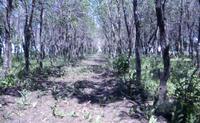 Woods Scene no.3