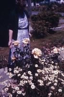[Flowers]
