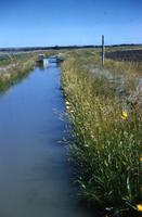 irrigation Ditch. Univ. Farm.