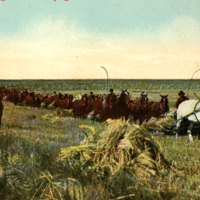 Canadian Harvesting Scene : Reaping Wheat