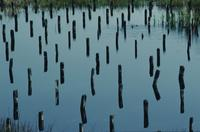 Patterns of small pilings in water