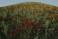 Gold and green and red-brown hillside