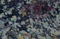 Purple, pink and green leaves - confetti