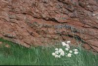 Rock strata and flowers on field trip