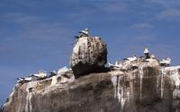 Gannet colony on beach