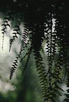 Ferns at Lorna Russell's
