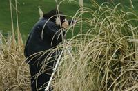Photographer in long grasses