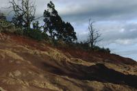 Red soils of Kaua'i : Slopes and tree