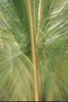 Palm fronds, Na Pali coast