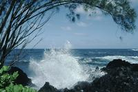 Surf and spray, Hilo gardens