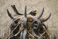 Birds' nest in wrought iron