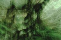Rainforest with camera movement