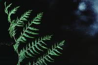 Close-ups of fern with camera movement