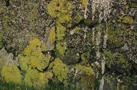 Close ups of rocks with green moss and lichen