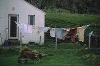 Clothesline outside house