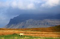 Sheep and cliffs