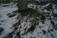 Callanish II in the snow