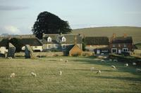 Cottages and sheep grazing near Avebury stone circle