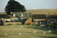 Avebury cottages and sheep grazing