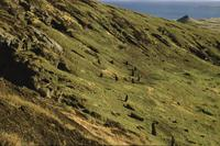 Steep hill littered with statues, Easter Island