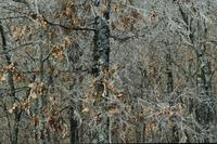 Ice storm in Ozark Mountains