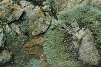 Closeup of lichen in Forest, Hot Springs National Park