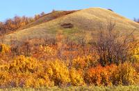 Autumn colours in Q'Appelle Valley en route to Redvers
