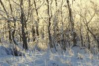 Morning light on hoar frost