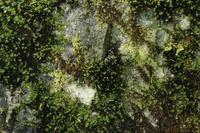 Close-ups of ferns and lichen at Medicine Bowls