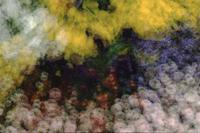 Multiple exposures of flower bed, Oak Bay