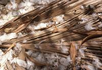 Feather and dried palm leaves