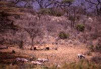Elands and baboons