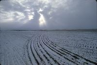 Light snowfall on tilled field near Arelee