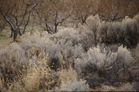 Grasses and other flora; orchard in background