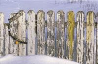 Wooden fence; chipped and peeling paint.