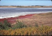 Alkali Lake with Red