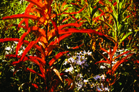 Colourful foliage