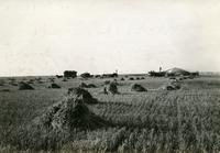 Threshing Near Macoun Soo Line
