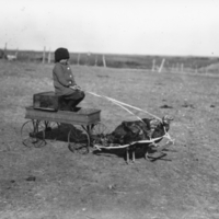 Gene Craig in a wagon, pulled by turkeys